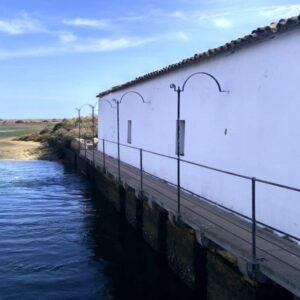 Birdwatching Algarve Ria Formosa Natural Park