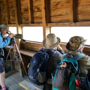 Birdwatching Ria Formosa
