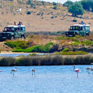 Jeep Safari Alagrve